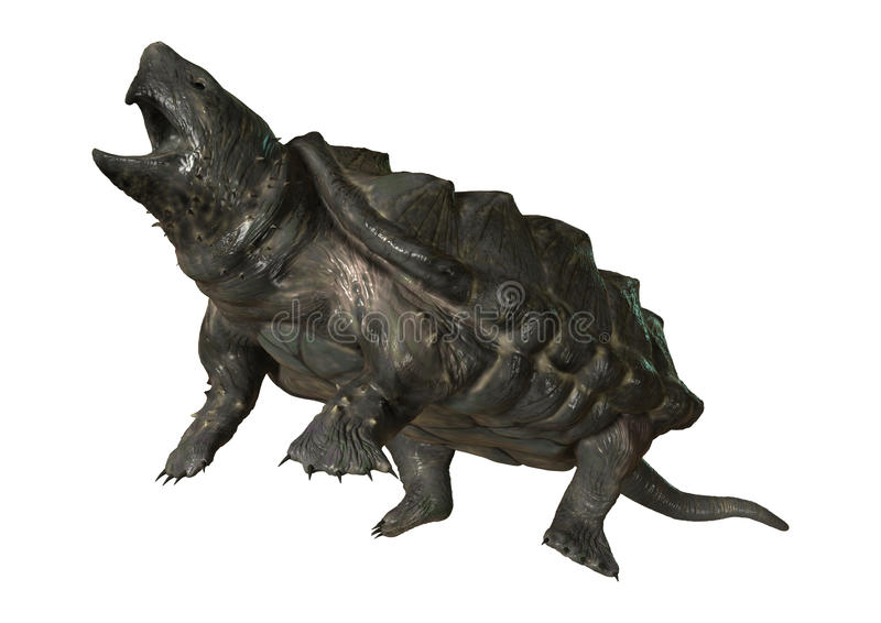 3D Rendering Alligator Snapping Turtle on White. 3D rendering of an alligator snapping turtle isolated on white background royalty free illustration