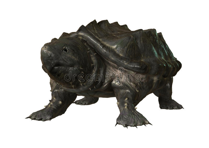 3D Rendering Alligator Snapping Turtle on White. 3D rendering of an alligator snapping turtle or Macrochelys temminckii isolated on white background stock illustration