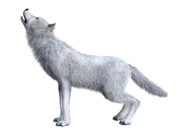 3D Rendering Arctic Wolf on White vector illustration
