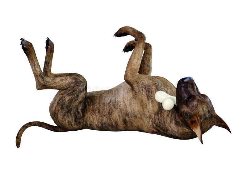3D Rendering Brindle Grat Dane Dog on White royalty free stock photos