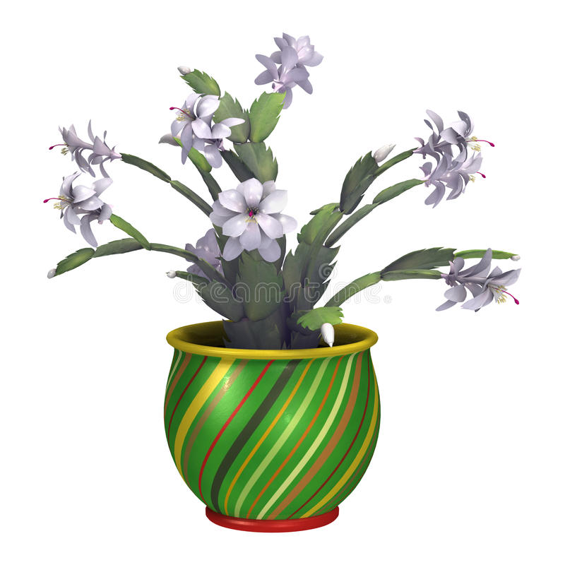 3D Rendering Christmas Cactus or Schlumbergera on White royalty free stock photo