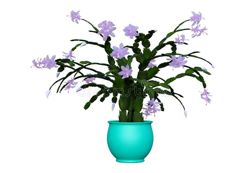 3D Rendering Christmas Cactus on White stock illustration
