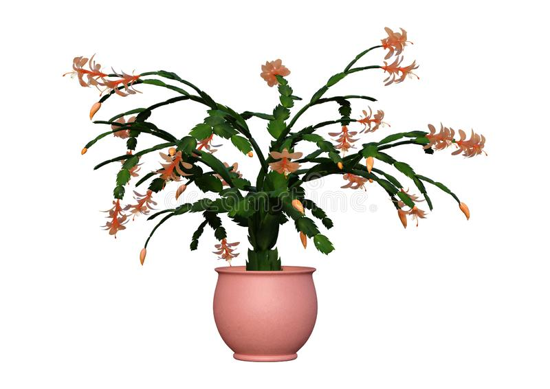 3D Rendering Christmas Cactus on White stock illustration