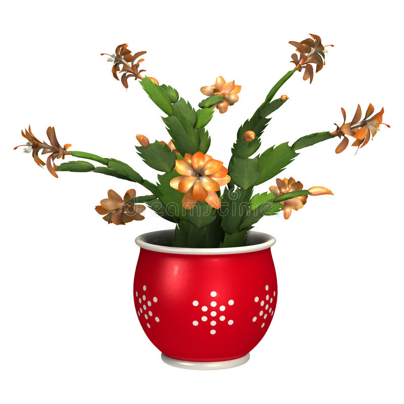 3D Rendering Christmas Cactus on White royalty free illustration