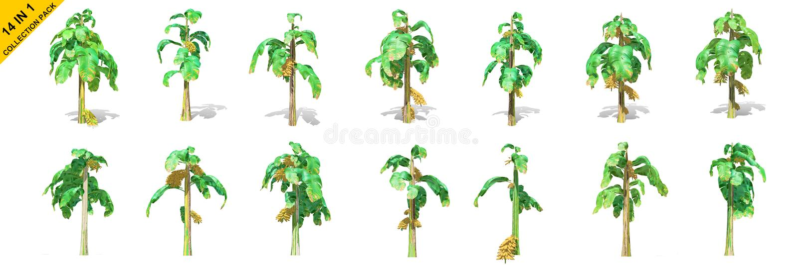 3D rendering - 14 in 1 collection of banana trees isolated over a white background stock illustration
