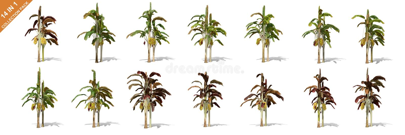 3D rendering - 14 in 1 collection of banana trees isolated over a white background vector illustration