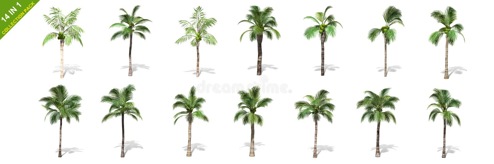 3D rendering - 14 in 1 collection of tall coconut trees isolated over a white background stock illustration