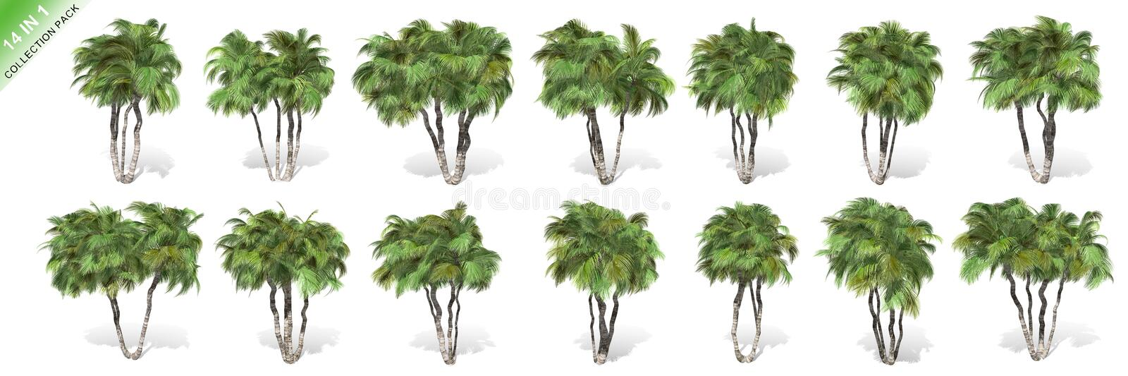 3D rendering - 14 in 1 collection of tall coconut trees isolated over a white background. Use for natural poster or wallpaper design, 3D illustration Design royalty free illustration