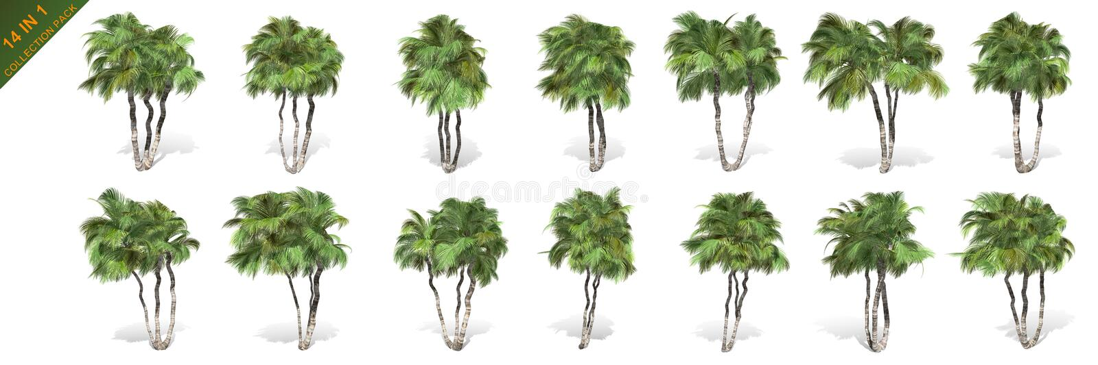 3D rendering - 14 in 1 collection of tall coconut trees isolated over a white background royalty free illustration