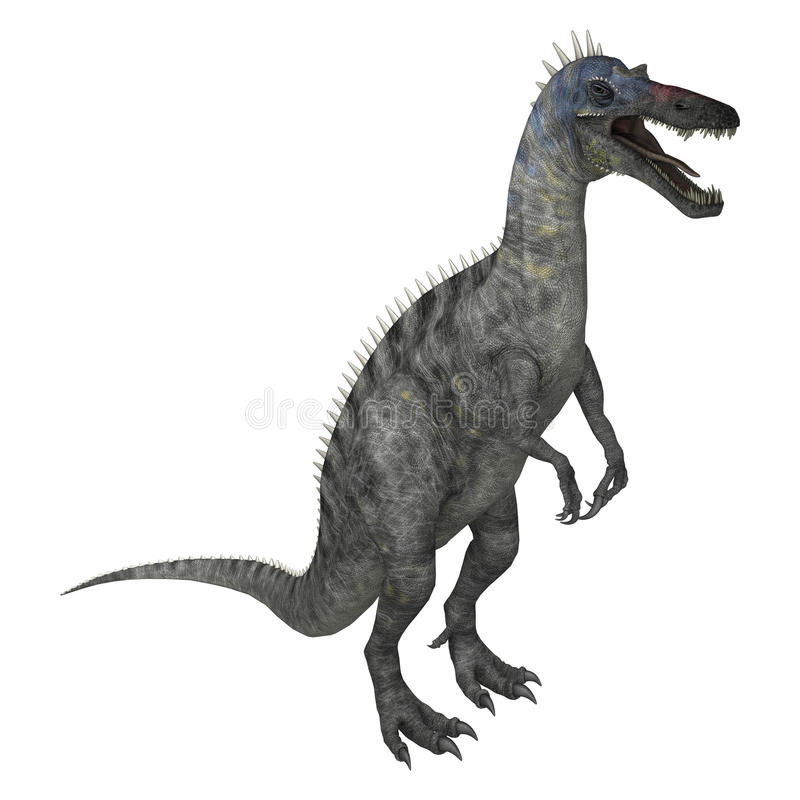 3D Rendering Dinosaur Suchomimus on White. 3D rendering of a dinosaur Suchomimus or Suchomimus tenerensis isolated on white background royalty free stock photo