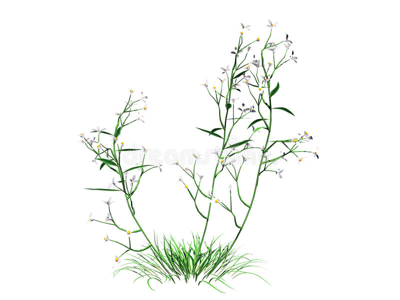 3d rendering of flower bush isolated on white can be used for foreground design vector illustration