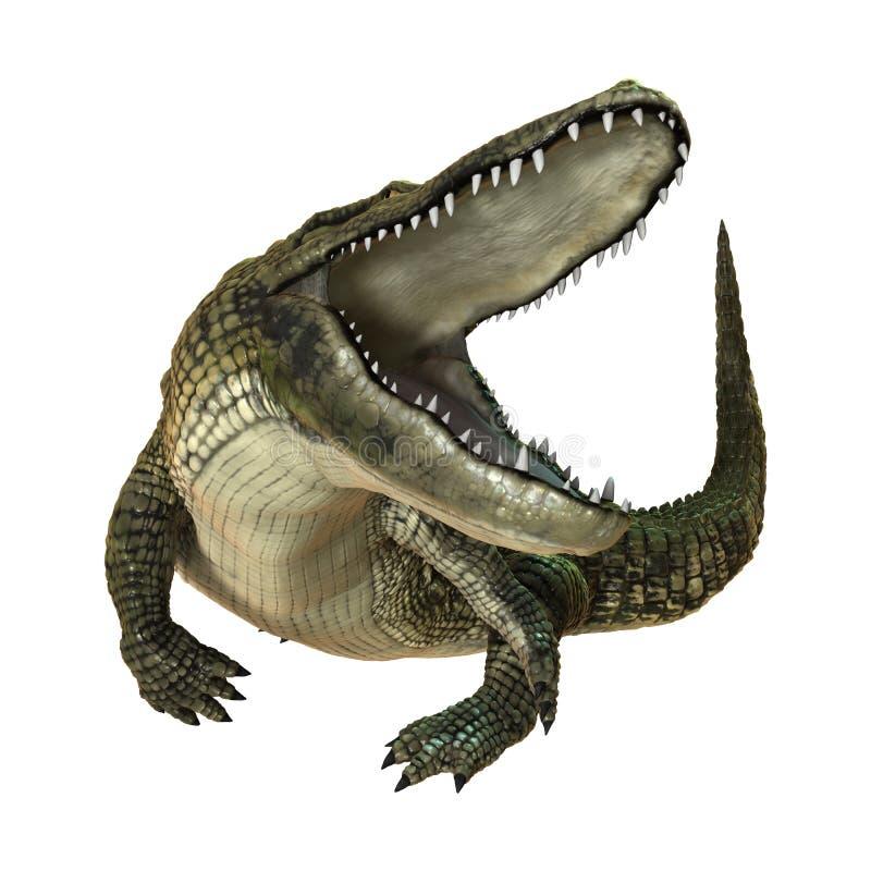 3D Rendering American Alligator on White stock illustration