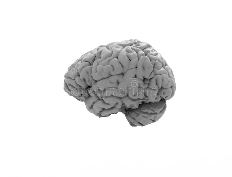 3D rendering of a human brain isolated in studio background vector illustration