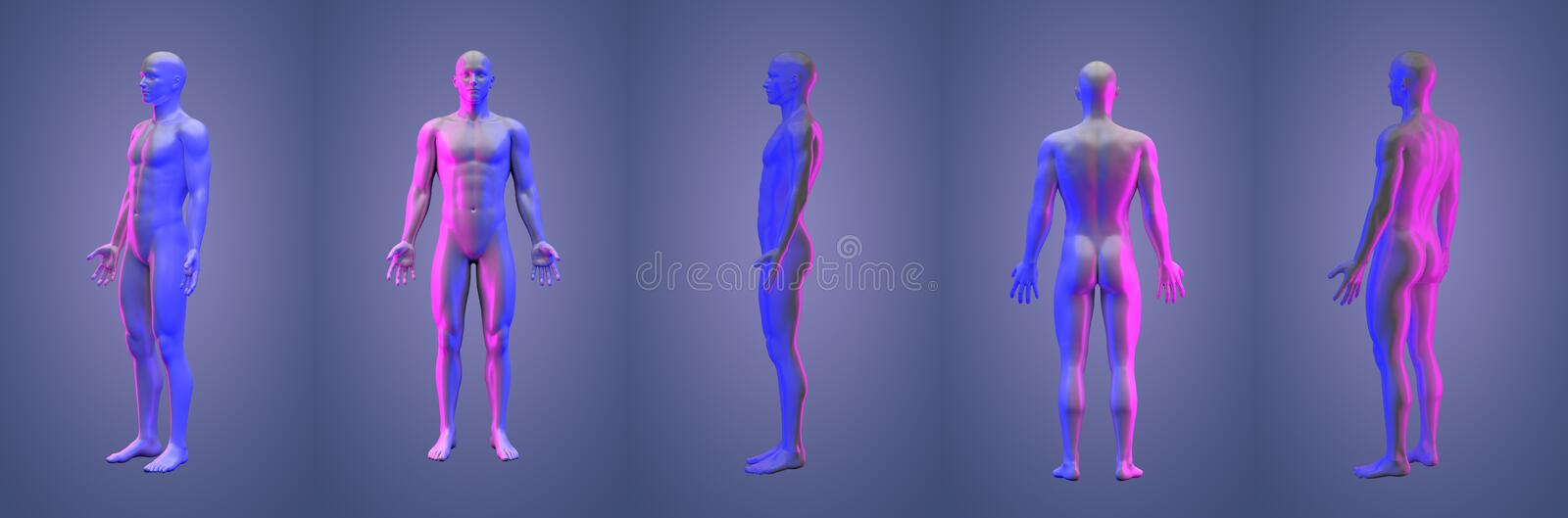 3d rendering illustration of human. Collection royalty free illustration