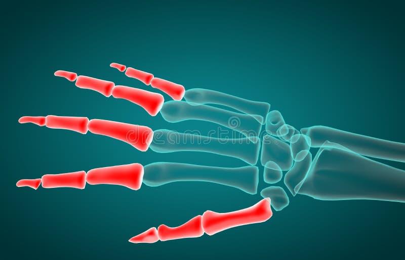 3d rendering illustration of phalanx bone royalty free illustration