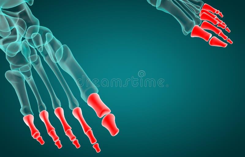 3d rendering illustration of phalanx bone vector illustration