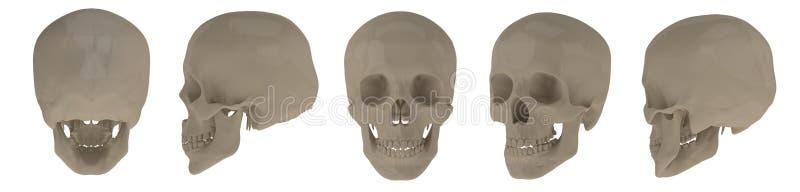 3d rendering of skull royalty free illustration
