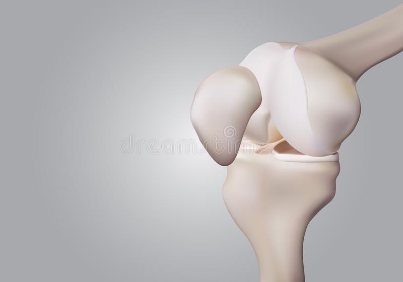 3D rendering, illustrations of human and medical knee science. 3D rendering , illustrations of human and medical knee science stock illustration
