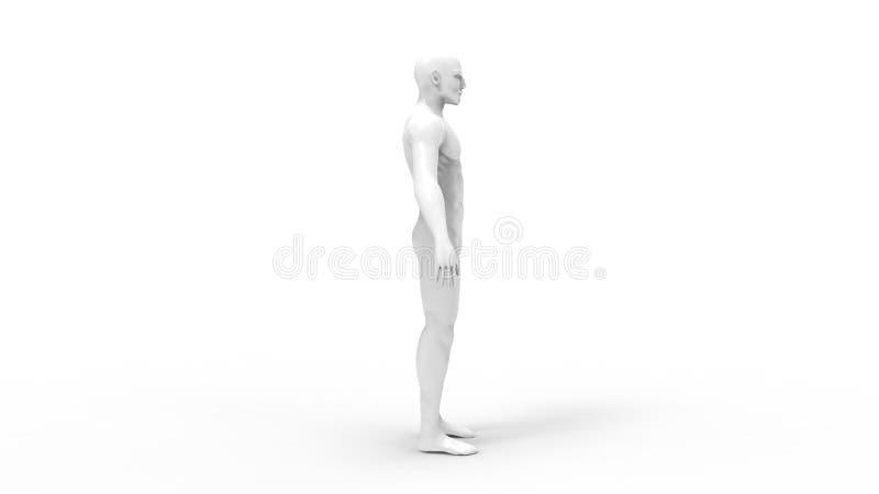 3d rendering męska chama modela osoba odizolowywająca w białym tle royalty ilustracja