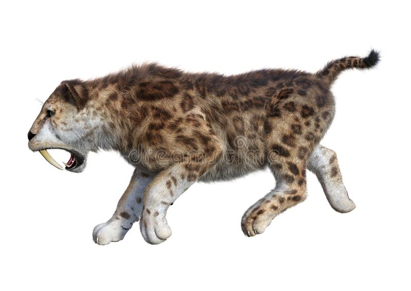 3D Rendering Sabertooth Tiger on White stock illustration