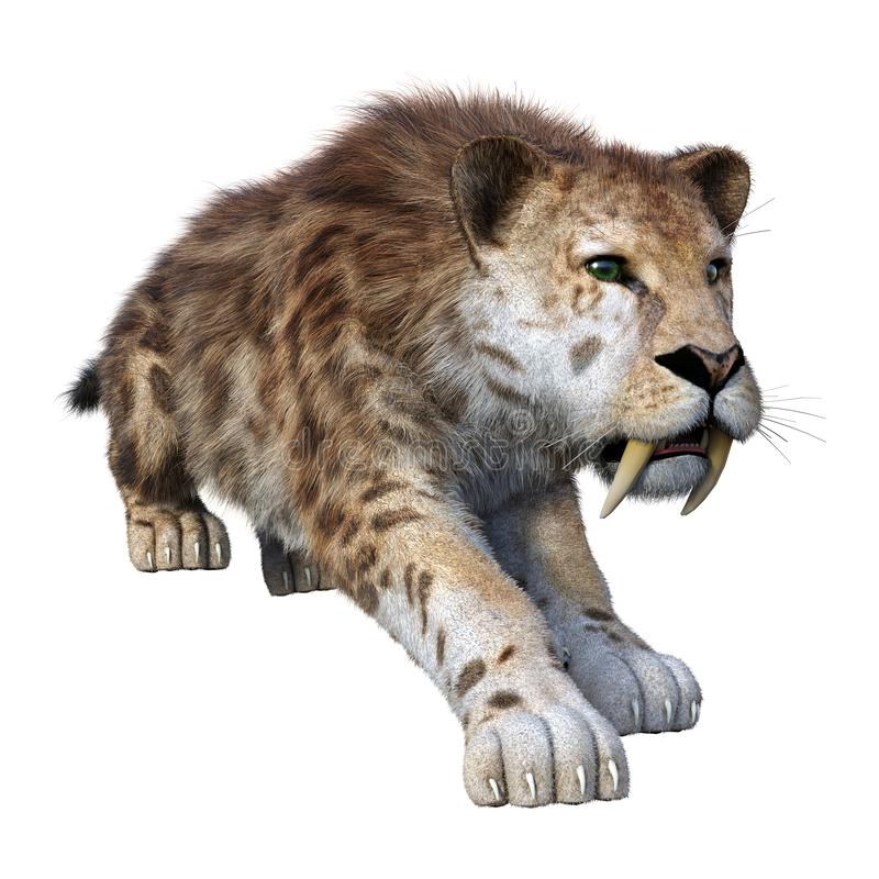 3D Rendering Sabertooth Tiger on White royalty free illustration
