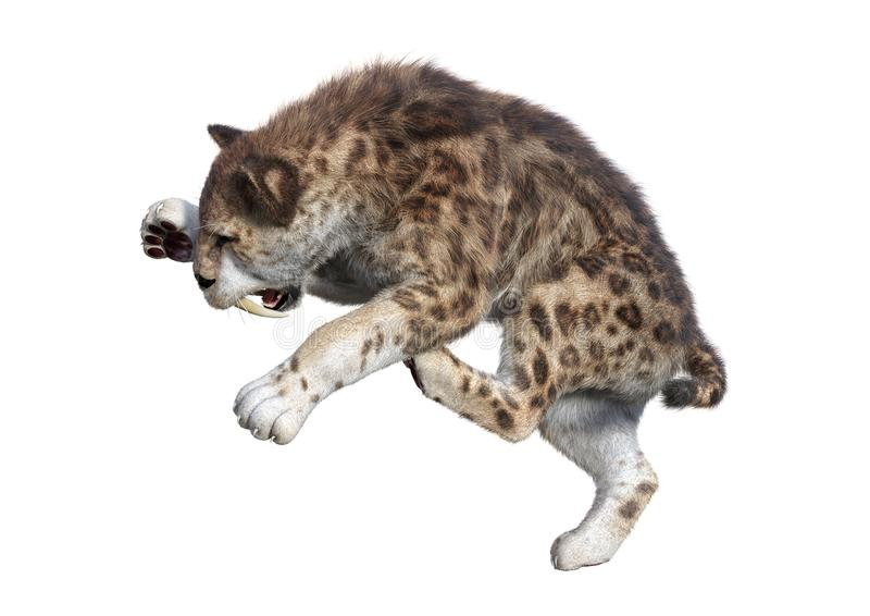 3D Rendering Sabertooth Tuger on White stock illustration