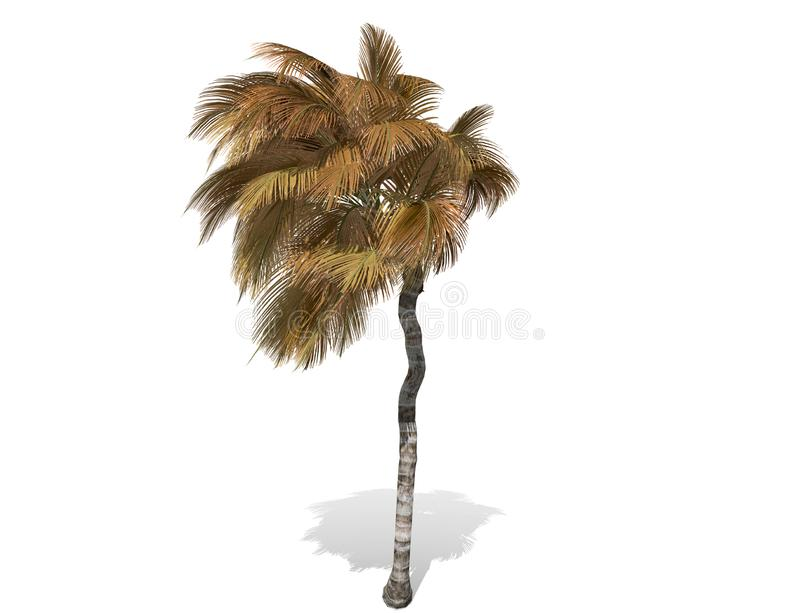3D rendering - tall coconut tree isolated over a white background royalty free illustration