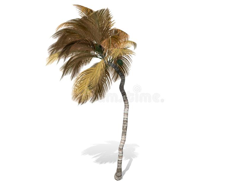 3D rendering - tall coconut tree isolated over a white background vector illustration