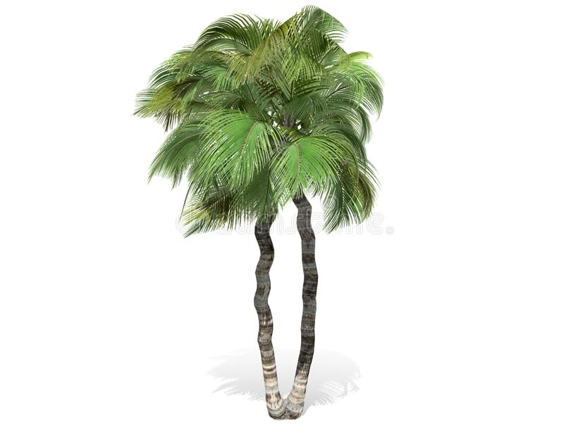 3D rendering - tall coconut tree isolated over a white background stock illustration