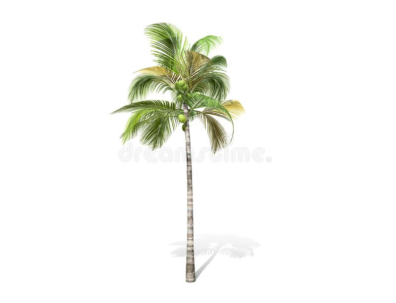 3D rendering - tall coconut tree isolated over a white background. Use for natural poster or wallpaper design, 3D illustration Design stock illustration