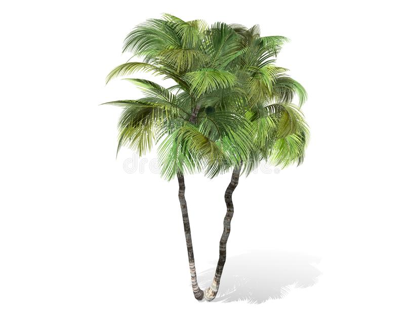 3D rendering - tall coconut trees isolated over a white background. Use for natural poster or wallpaper design, 3D illustration Design royalty free illustration