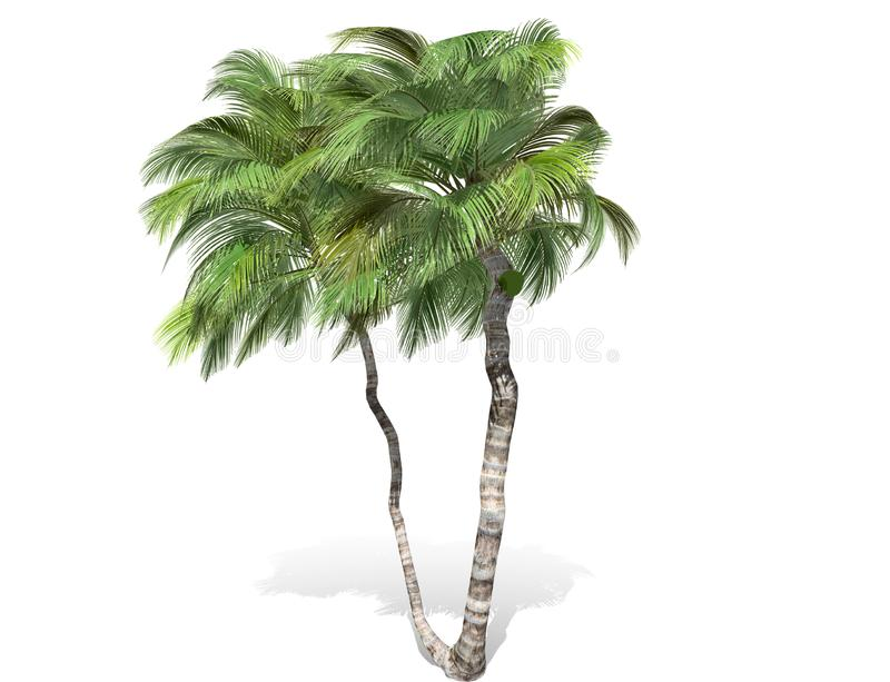 3D rendering - tall coconut trees isolated over a white background. Use for natural poster or wallpaper design, 3D illustration Design stock illustration