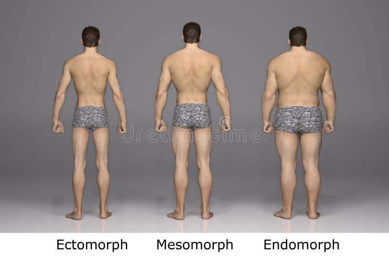 3D rendering: 3 typ męski ciało, tylny widok ilustracja wektor