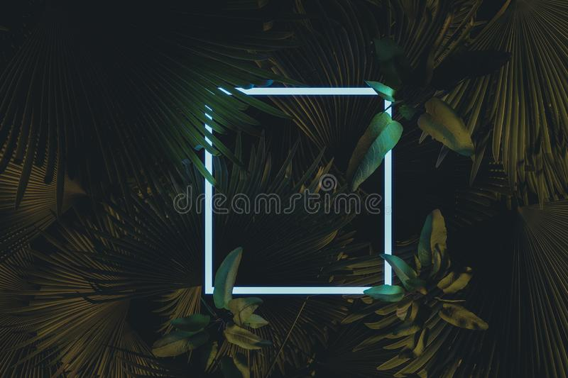 3d rendering of white square neon light with tropical leaves.. Flat lay of minimal nature style concept.  royalty free illustration