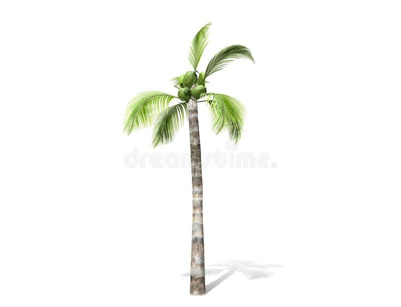 3D rendering - wysoki kokosowy drzewo odizolowywaj?cy nad bia?ym t?em ilustracja wektor