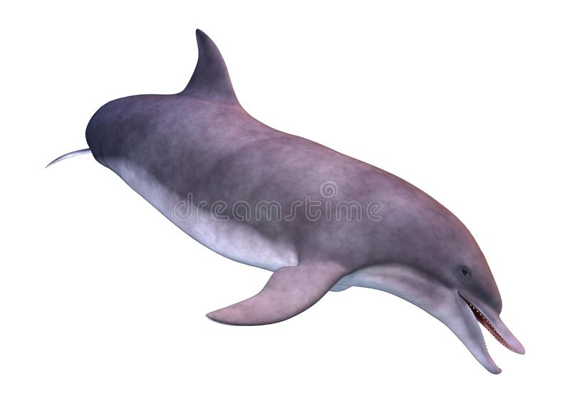 3D renderingu delfin na bielu ilustracja wektor