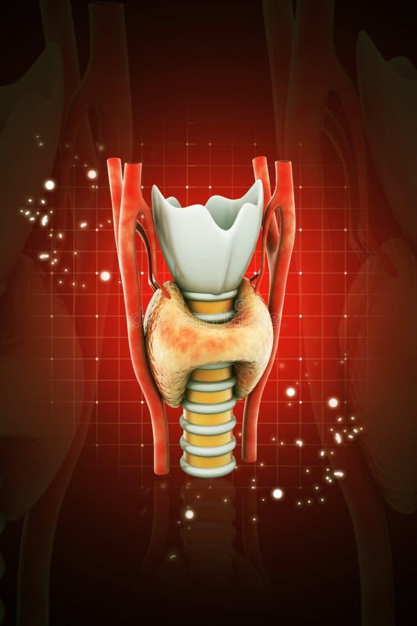 3d rendeu a glândula de paratireoide da glândula endócrina em um fundo da cor ilustração royalty free