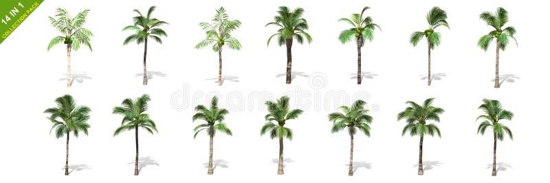 3D rendição - 14 em 1 coleção das árvores de coco altas isoladas sobre um fundo branco ilustração stock