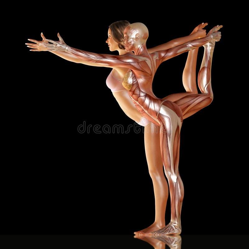 3d rendono del corpo della donna con l'anatomia del muscolo che fa l'yoga illustrazione vettoriale