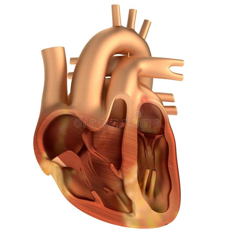 3d rendono di cuore umano illustrazione vettoriale