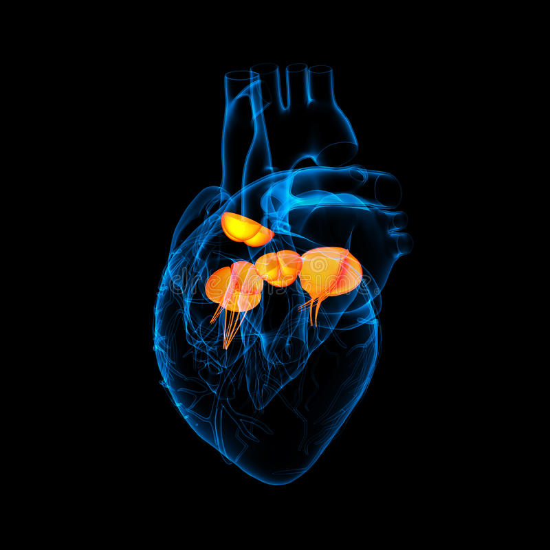 3d rendono la valvola cardiaca royalty illustrazione gratis