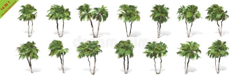 3D rendu - 14 dans 1 collection d'arbres de noix de coco grands d'isolement au-dessus d'un fond blanc illustration stock