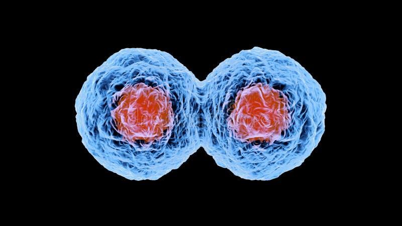 3D a rendu l'illustration de la reproduction de cellules illustration stock