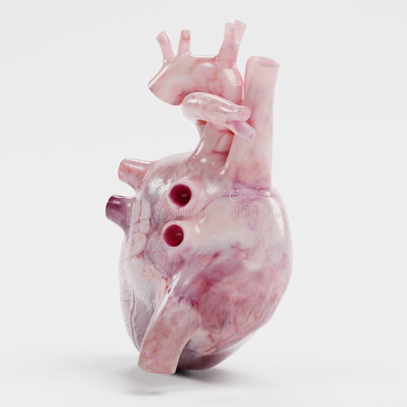3d rinden de corazón humano stock de ilustración