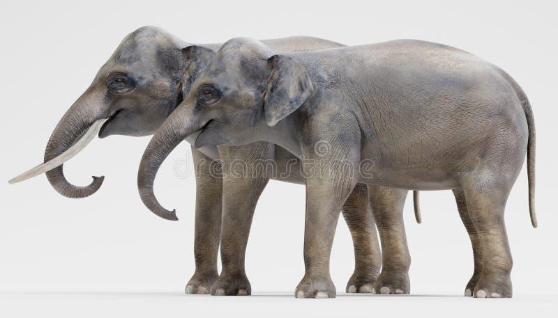 3D rinden de elefantes asiáticos stock de ilustración