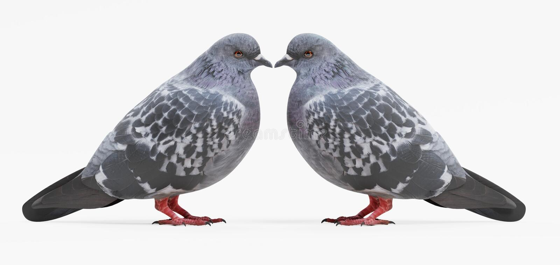 3D rinden de palomas ilustración del vector