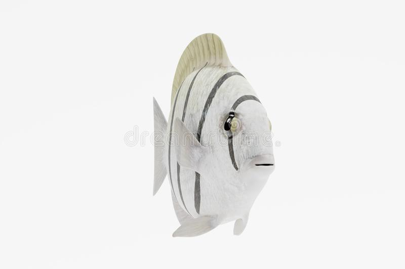 3d rinden del convicto Tang Fish libre illustration