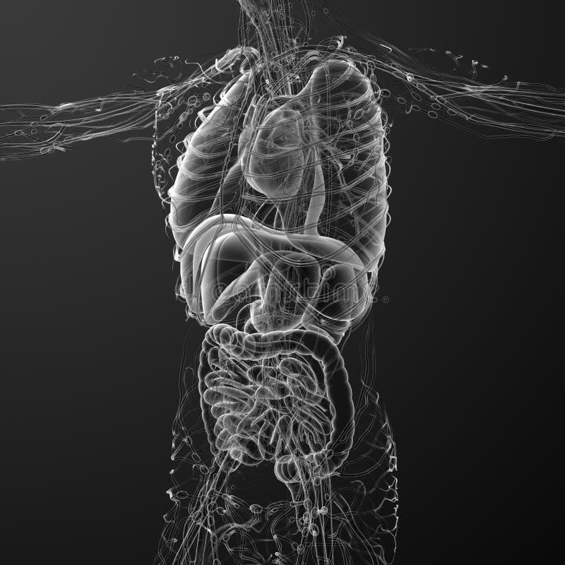 3d rinden el ejemplo médico del cuerpo humano ilustración del vector