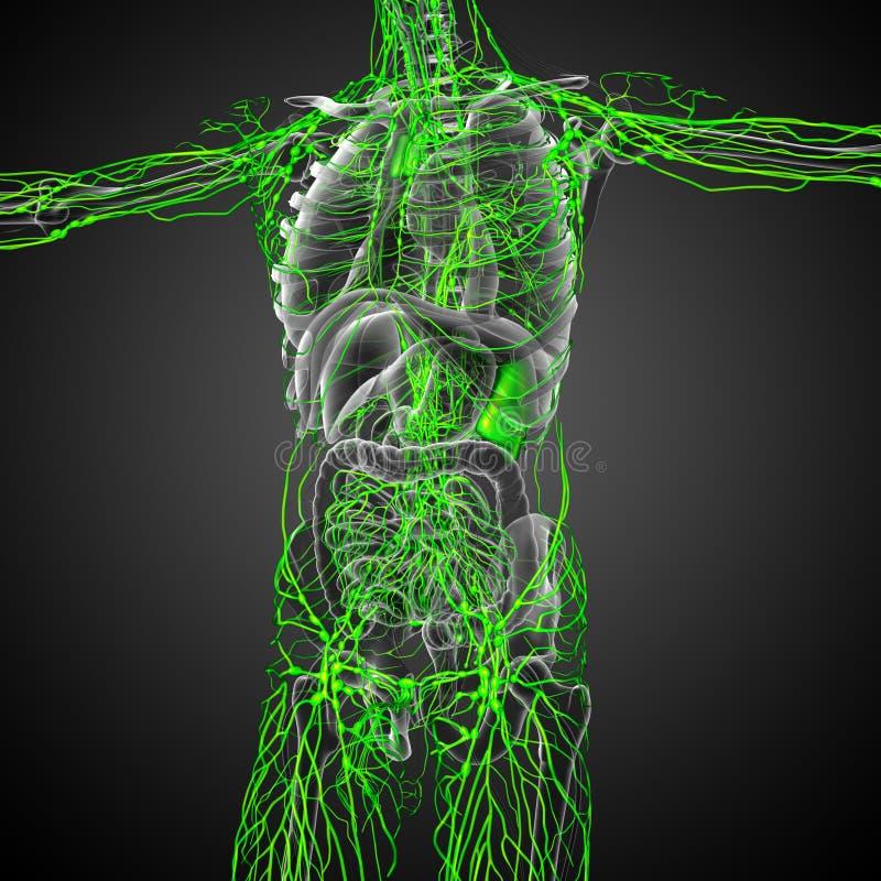 3d rinden el ejemplo médico del sistema linfático ilustración del vector