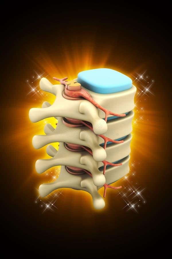 3d rindió de espina dorsal humana en médico en fondo del color libre illustration
